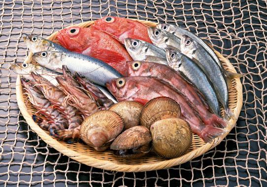 魚でセロトニン
